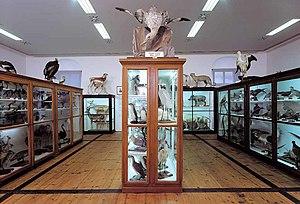 Naturhistorisches Museum 1