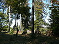 Naturnaher Buchenwald im Weißenberggebiet.JPG