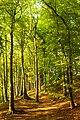 Naturschutzgebiet Wagenbruchquellen (RE-036).jpg