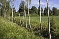 Nearly 29 km hike on the former railway Kuldīga-Alsunga - panoramio.jpg