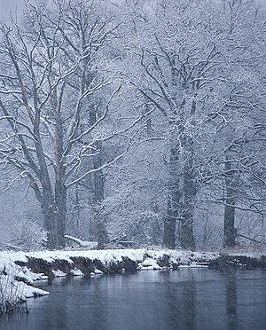 Bryansky Les Nature Reserve - Image: Nerussa river