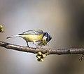Nest building time (33927762516).jpg