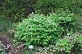 Neuer Botanischer Garten Marburg - 0003.jpg