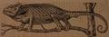 Neznámý - Chameleón.png