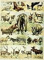 Nouveau Larousse illustré - dictionnaire universel encyclopédique (1898) (14595587818).jpg
