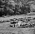 O'Sullivan, Timothy H. - Gettysburg, »Ernte des Todes« (Zeno Fotografie).jpg