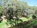 OIC torrens river near brickworks 2.jpg