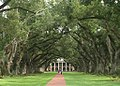 Oak alley - view from front.jpg