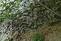 Oberlausitz 2012-05-26-7244.jpg
