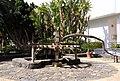 Old irrigation equipment Pajara (3312213052).jpg