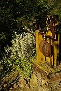 Old sack scale - measurement in Botanical Garden - Chania - Crete - Greece.jpg