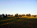 Olive trees on Dehesa del Generalife Park 2.JPG