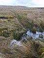 On White Moor - geograph.org.uk - 1772636.jpg