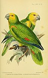 On the birds of the islands of Aruba, Curaçao, and Bonaire (1893) (14746930511).jpg