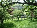 Orchard of Celestianpower.JPG