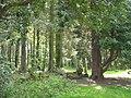 Ornamental woodland at Glynllifon - geograph.org.uk - 787206.jpg