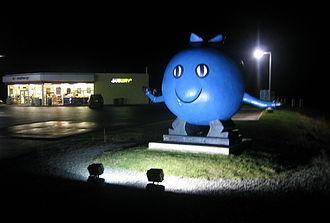 Vaccinium angustifolium - Giant blueberry person in Oxford, Nova Scotia