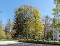Pörtschach Johannaweg 5 Villa Wörth Parkbäume W-Ansicht 15042020 8725.jpg