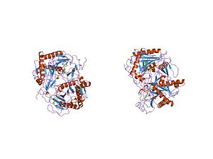 Galactose-1-phosphate uridylyltransferase - structure of nucleotidyltransferase complexed with udp-galactose
