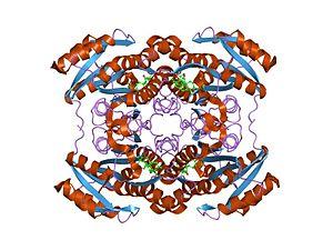 Short-chain dehydrogenase - Image: PDB 1hdc EBI