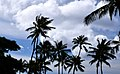 Palms in the Breeze (23563641350).jpg