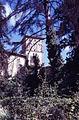 Paolo Monti - Servizio fotografico (Forlì, 1971) - BEIC 6333266.jpg