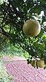 Papanas Fruit.jpg