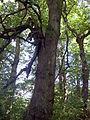 Park dworski Czachórskich (5).jpg