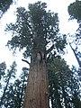 Parque Nacional Sequoia3623.JPG