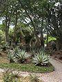 Parque del Este - Jardin Xerofito - 2001 Caracas - Venezuela 003.jpg