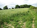 Path skirting a field's edge - geograph.org.uk - 1341835.jpg