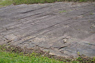 Late Paleozoic icehouse - Glacial striations formed by late Paleozoic glaciers in the Witmarsum Colony, Paraná Basin, Paraná, Brazil