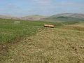 Peeblesshire farmland - geograph.org.uk - 375933.jpg