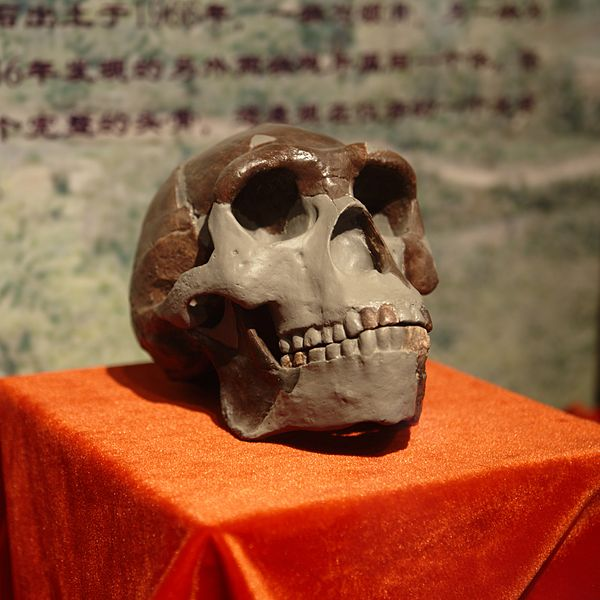Report from Former U.S. Marine Hints at Whereabouts of Long-Lost Peking Man Fossils