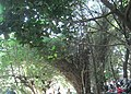 Pemkot Cimahi - panoramio.jpg