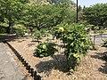 Peony Garden in Iwakuni Chokokan Museum.jpg