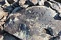 Petroglyphs from Ukhtasar 15092019 (13).jpg