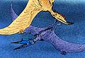 Phobetor parvis.jpg