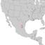 Picea martinezii range map 2.png