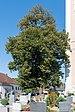 Pichl bei Wels Friedhofslinde-9306.jpg