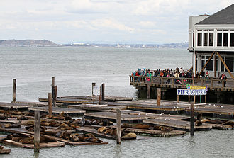 Pier 39 - The sea lions at Pier 39 have become a tourist attraction in their own right
