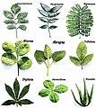 Plant morphology.jpg