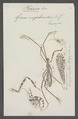 Ploearia - Print - Iconographia Zoologica - Special Collections University of Amsterdam - UBAINV0274 041 08 0005.tif