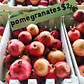 Pomegranates at Green String Farms, Petaluma, CA - Stierch.jpg