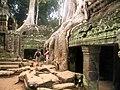 Potęga dżungli w świątyni Ta Prohm - panoramio.jpg