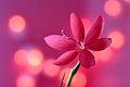 Pretty in Pink (7991640608).jpg