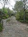 Prop del turó de Can Castellví P1240644.jpg