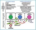 Prostaglandinas y cancer.jpg
