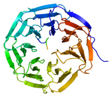 Protein WDR5 PDB 2cnx.png