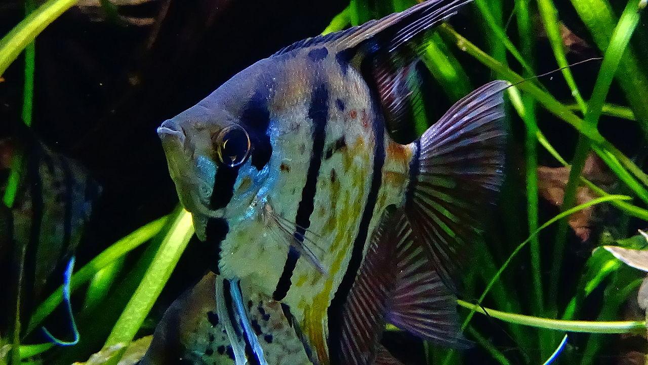 Rencontres sauvages aquarium porte doree